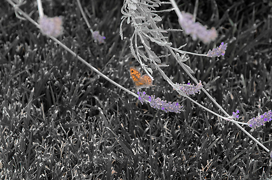 Lonely Butterfly by Sotiris Filippou