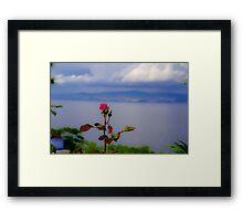 Beauty of Rose Framed Print