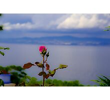 Beauty of Rose Photographic Print