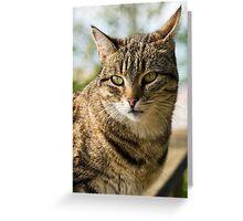 Kitty On The Bridge Greeting Card
