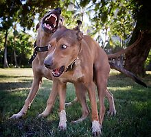 Dogs with game face on .26 by Alex Preiss