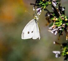 Butterfly Playground by Sotiris Filippou