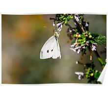 Butterfly Playground Poster