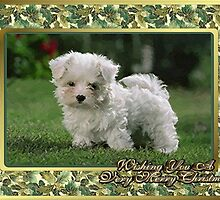 Maltese Dog Christmas by Oldetimemercan