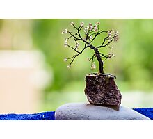 Little Tree Photographic Print