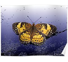 Pearl Crescent On Plaster  Poster