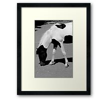 Black n White Horse Framed Print