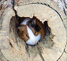 Vicious Animal Sleeping by Sotiris Filippou
