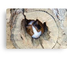 Vicious Animal Sleeping Canvas Print