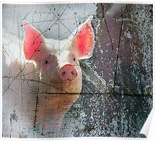 Pink Pig Poster