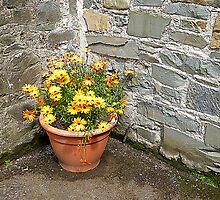Daisy, Daisy, How Does Your Garden Grow!! by Fara