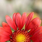 Love`in a Daisy by HanieBCreations