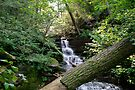 Nameless Waterfall In Ricketts Glen by Gene Walls
