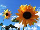 Sunflower Sky by BettyEDuncan