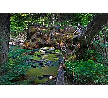Uprooted Tree Photographic Print