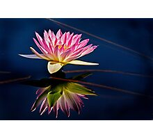 Reflections of a Waterlily Photographic Print