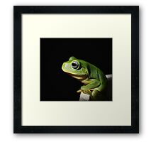 Calender 2014 - Green Tree Frog Framed Print