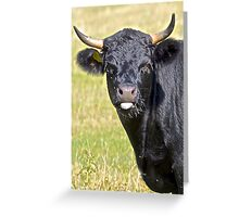 Bull's Opinion Greeting Card