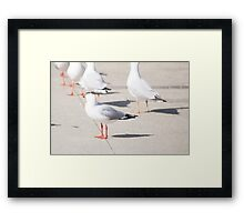 Home of the Pigeon Framed Print