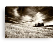 Tuscan Pines Canvas Print