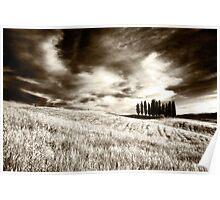 Tuscan Pines Poster