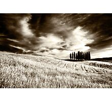 Tuscan Pines Photographic Print