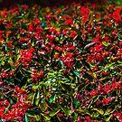 Red Oasis by Sotiris Filippou
