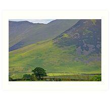Lone Tree at the Lake District, UK Art Print