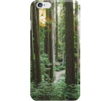 Sunset in Arcata Community Redwood Forest iPhone Case/Skin