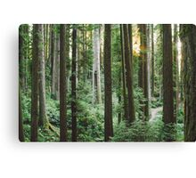 Sunset in Arcata Community Redwood Forest Canvas Print