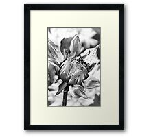 Flower in grey Framed Print