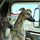 """""""Gypsy, You Keep An Eye On The Right Side While I Back This Puppy Up"""" ! by Gail Jones"""