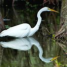 Egret Reflected at Lake Martin by Bonnie T.  Barry