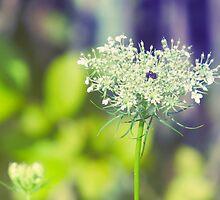 Wild Flowers 2 by ElleEmDee