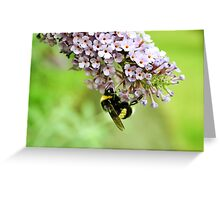 White Tailed Bumblebee - London Greeting Card