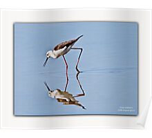 Plover Reflection Poster