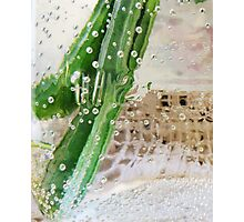 Effervescent  Photographic Print