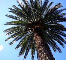 Palm Tree, Wellington by jezkemp