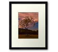 Evening Breezes Framed Print