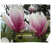 Twin Magnolias Poster
