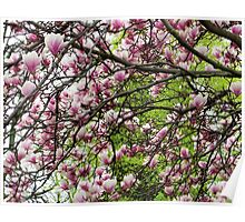 Magnolia Pink and Spring Green Poster
