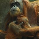 Orangutan - mother and baby by Cat Edwards