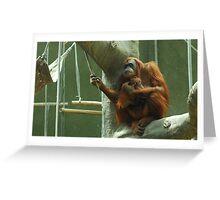 Orangutan - mother and baby Greeting Card