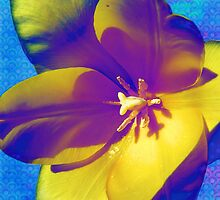 Trippy Tulip by SRowe Art