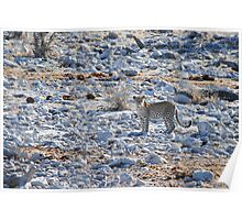 Leopard at Watering Hole Poster