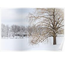 Winter Willow Tree Poster