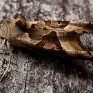 Moth by elsie