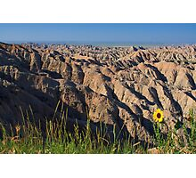 Sunflower over Badlands National Park Photographic Print