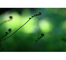 Elements Series - Life! Photographic Print