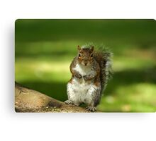 Squirrel t-shirt Canvas Print